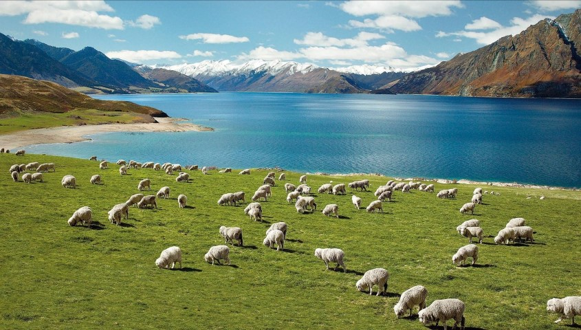 New Zealand Tour and Travels, New Zealand tourism