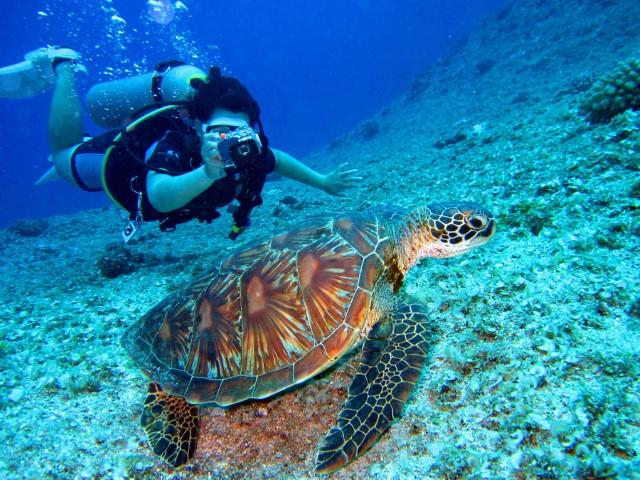 Fiji Tour and Travels, Fiji tourism