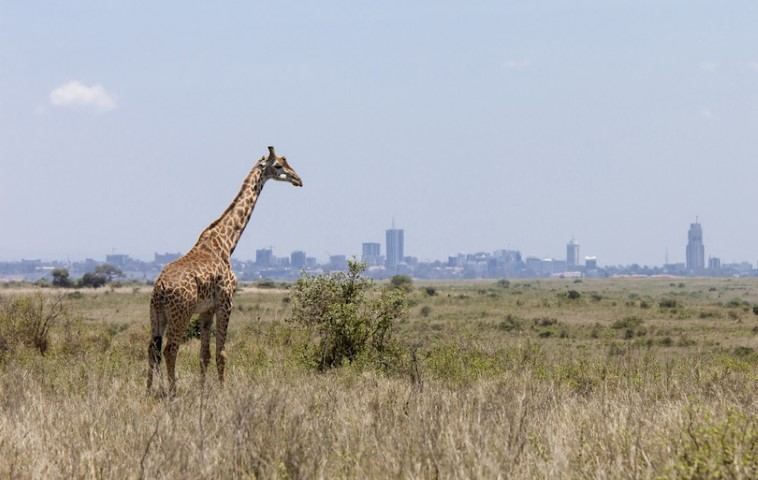 Kenya Tour and Travels, Kenya tourism