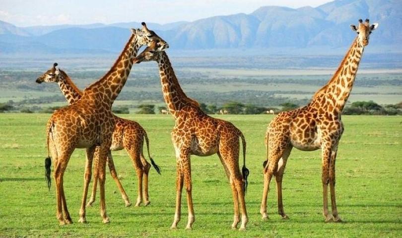 Tanzania Tour and Travels, Tanzania tourism