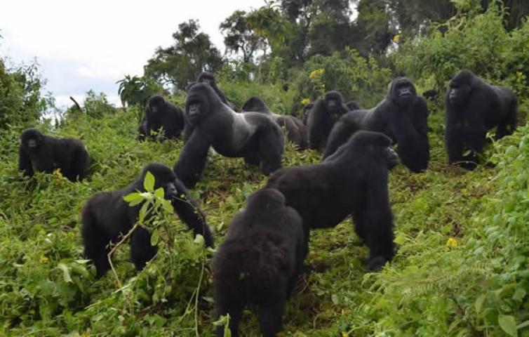 Uganda Tour and Travels, Uganda tourism